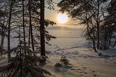 Joensuu - Finland (Sami Niemeläinen (instagram: santtujns)) Tags: joensuu suomi finland pohjoiskarjala north carelia karelia kuhasalo lake järvi frozen sunset auringinlasku talvi winter luonto nature forest metsä puu tree