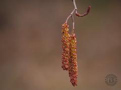 Seed Pods, Pisgah National Forest, North Carolina (netbros) Tags: pisgahnationalforest northcarolina danielridgetrail seedpods netbros internetbrothers