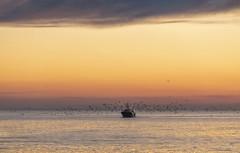 La Turballe (Didier Ensarguex) Tags: laturballe heuredorée bateauxdepêches peches 44 loireatlantique bretagne breizh didierensarguex 5dmarkiv 70200 canon