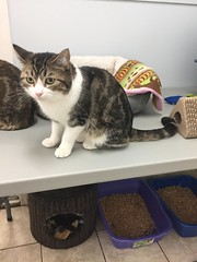 Dudley - 2 year old neutered male