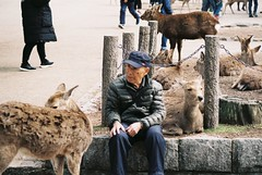 Old Friends (GingerKimchi) Tags: nara osaka japan travel nature asia film 35mm fujifilm canon deer canona1 2019 spring february march