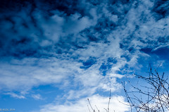 Blue Skies Up Above .... (BGDL ~ Falling Behind But Will Catch Up!!) Tags: lightroomcc nikond7000 bgdl nikkor18105mm3556g odc branches garden sky cloudsorcloudy