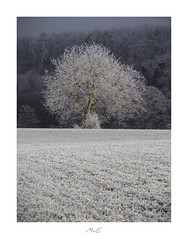 Thoughtfulness (Max Angelsburger) Tags: lone tree baum frost icy eis weis blau blue white stille nachdenklichkeit thoughtfulness silence dezember december 2018 winter wurmberg enzkreis landscape canon pocketworldiglandscapedreamspotsvisualheavenlandscapephotolandscapelovernatgeoadventureearthexperiencemthrworldmajesticearth