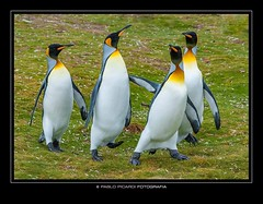 IslasMalvinas (Pablo B. Picardi) Tags: pablopicardi nature argentina argentiniancountryside argentina360 islasmalvinas photography folowme travels landscape islas nikon nikkor