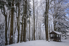 Z19_4606 LT (Zoran Babich) Tags: winter medvednica sljeme mountain zagreb croatia snow lanscape forest