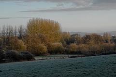 (vieubab) Tags: arbres atmosphère bois branchage branches calme chemin campagne extérieur escapade forêt feuillage feuille goldenhour hiver hardelot luminosité lumière levédujour lumièrediffuse nature paysage