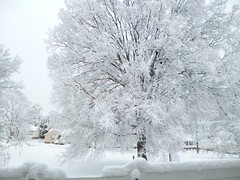 SnowWhiteGSOTreesFebruary2015 (tombrewster6154) Tags: snow greensboro northcarolina winter wonderland white cold beautiful peaceful quiet buried trees houses late february homes buildings windows rooftops slope hill early 2015 covered pretty lovely striking amazing silence silent braches