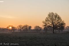 Sunrise in Cheshire (rjonsen) Tags: field tree grass golden light hour sky horizon england landscape