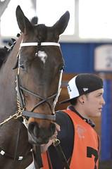 2016-04-22 (14) r6 #7 Quartet (JLeeFleenor) Tags: photos photography md maryland marylandracing marylandhorseracing outside outdoors horses thoroughbreds equine equestrian cheval cavalo cavallo cavall caballo pferd paard perd hevonen hest hestur cal kon konj beygir capall ceffyl cuddy yarraman faras alogo soos kuda uma pfeerd koin حصان кон 马 häst άλογο סוס घोड़ा 馬 koń лошадь