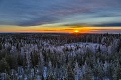 December morning (Arttu Uusitalo) Tags: sunrise morning winter december wideangle southern ostrobothnia woods forest landscape sky clouds canon eos 5d mkiv finland ef 24105l