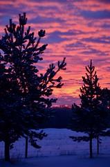 Grand Finale (faithroxy) Tags: clouds sky sunrise silhouette alberta canada farm fence snow winter new years field skies december 2018