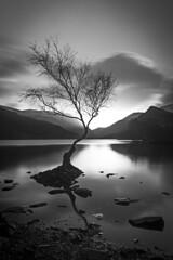 Lone Tree B&W (kris shaw) Tags: wales snowdonia anglesey northwales waterfalls mountains travel longexpo seascape sunset sunrise cymru lakes trfan snowdon penmon