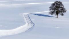Loipe (Sanseira) Tags: bayerischer wald nationalpark schnee eis loipe langlauf ski piste