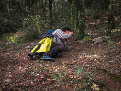 Setas del Montseny (efe Marimon) Tags: felixmarimon barcelona montseny setas bolets setasdelmontseny appleiphonese