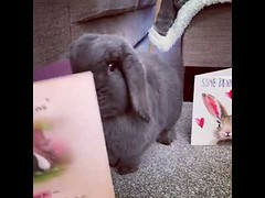 Cute bunny loves you (tipiboogor1984) Tags: aww cute cat funny dog youtube