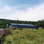 牛舎:屋根を鉄骨梁にもたせかけ一面解放の写真