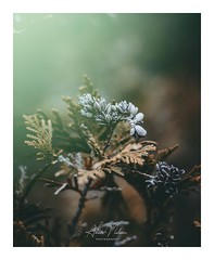 1548975622211 (PhotoByNelson) Tags: nikon niagara nature canada ontario welland beautiful lightroom photography d5600 bokeh creative