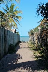 a path to heaven (F. Carvalho) Tags: brazil brasil nordeste bahia caminho path beach praia bluesky céuazul green verde mata coqueiro