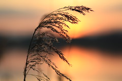 37 (Nils Stolpmann) Tags: landscape nature sea ocean boats yachts clouds sky sun sunrise sunset birds light sunlight nautic
