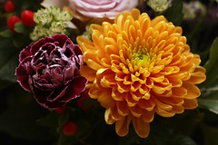 Carnation & Chrysanthemum (7/52) (Stu.G) Tags: project52 project 52 project522019 522019 16feb19 16thfebruary2019 16th february 2019 february2019 16thfebruary 16219 160219 1622019 16022019 carnation chrysanthemum flower flowers canoneos40d canon eos 40d canonef50mmf14usm ef 50mm f14 usm ef50mm ef50mm14 canon50mmf14 england uk unitedkingdom united kingdom britain greatbritain d europe eosdeurope