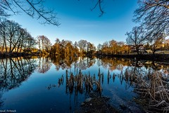 Ein idyllisches Plätzchen/ an idyllic place (Andi Fritzsch) Tags: pound teich wasser water tree trees baum sunset sunsetphotography spiegelung mirror natur nature naturephotography landscape landscapephotography nikond7100 sigma1020mm flickerunitedaward
