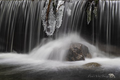 Dark Waters (PamsWildImages) Tags: waterfall nature naturephotographer britishcolumbia beautiful canada canon pamswildimages pammullins