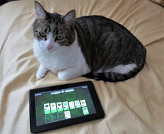 Solitaire (pirate johnny) Tags: solitaire buffy cat shamrocksolitaire
