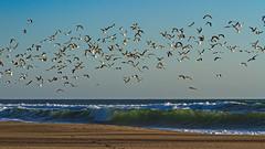 Gazos Creek State Beach, CA. (j1985w) Tags: california gazoscreekbeach bird ocean water beach sky