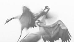Drei im Nebel (IIIfbIII) Tags: crane fog nebel kranich grus gris schwarzweiss birdphotography bird bw blackandwhite wildlife wildlifephotography winter