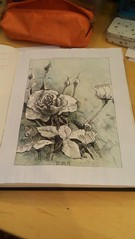 2019-03-28_11-57-36 (alratan) Tags: flower цветок rose роза графика скетчбук sketchbook