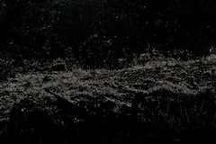 01-07-19-0043877 (Lake Worth) Tags: nature arizona tontonationalforest sonorandesert