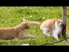 You Need to See A Doctor If You Won't Laugh – Best Funny Animal Compilation (videosloving) Tags: dogs cats cuteanimals cutedogs cutecats cutepuppy cutekittens hilarious trynottolaugh funnyvideo funny funniest fails funnyfail amazing viralvideo video videosloving viral animalslove latest laughter new trending doingitwrong scared