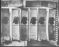 Teststrips (Attila Pasek (Albums!)) Tags: stilllife 8x10 ambrotype vds largeformat collodion rodenstock 240mmf56 wetplatecollodion vdscameramanufactory