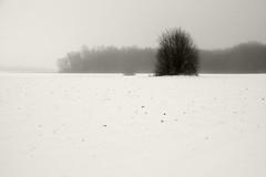 Udune maastik (Jaan Keinaste) Tags: pentax k3 pentaxk3 eesti estonia loodus nature maastik landscape udu fog lumi snow talv winter