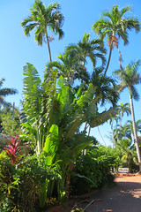 Key West Trip, December 1 to 11, 2018 1627Ri 4x6 (edgarandron - Busy!) Tags: keywest westmartellotower keywestgardenclub