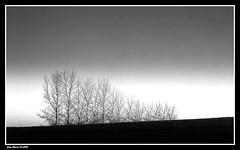 La Simplicité...... (faurejm29) Tags: faurejm29 canon paysage nature campagne landscape nb monochrome