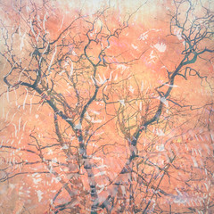 30/365 (Jane Simmonds) Tags: iphone multipleexposure woodland trees bracken abstract forestofdean 3652019