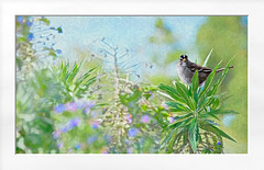 Winter Garden (Christina's World!) Tags: bird sparrow creative california colorful impressionism impressionistic nature artistic pastels colors painterly exotic flowers frame garden green bushes plants fragile framing landscape leaves light outdoors painting sandiego scenic seasons textures trees unitedstates usa vegetation vividcolors winter february botanicgarden exhibitionoftalent