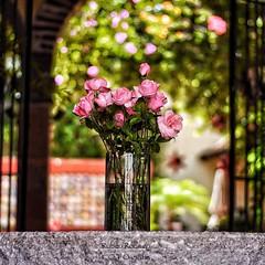 Oxygen (Mister Blur) Tags: nikkor nikon d7100 50mm f18 allisfulloflove allisfullofbokeh flowers roses foryou bouquet love bokeh profundidaddecampo depthoffield dof valentinesday square format youremyoxygen oxygen iloveyou chicane snapseed rubén rodrigo fotografía