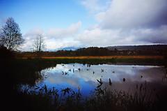 Late-autumn landscape (Eric Flexyourhead) Tags: burnaby canada britishcolumbia bc burnabylake burnabylakeregionalnaturepark water lake marsh wetlands reflection autumn sky clouds moody ricoh gr