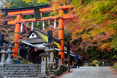 Ryōbu Torii (eeshawn.) Tags: japan kyoto arashiyama torii sagatoriimoto street machiya autumn eeshawn