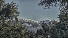 Mirada al invierno (pedroramfra91) Tags: exteriores outdoors paisaje landscape invierno winter nieve snow arboles trees