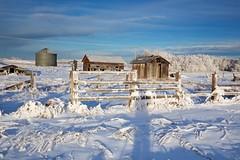 frost shadow (John Andersen (JPAndersen images)) Tags: albertafarm abandoned winter snow
