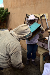 DSC_9746-61 (jjldickinson) Tags: nikond3300 107d3300 nikon1855mmf3556gvriiafsdxnikkor promaster52mmdigitalhdprotectionfilter longbeach bixbyknolls longbeachbeekeepers outreach class beeprepared insect bee honeybee apismellifera hive hiveinspection dickbarnes