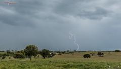 Alentejo Eléctrico! (ExtremAtmosfera) Tags: trovoada relâmpago alentejo stormchasing thunderstorm lightningstorm skies convectividade clouds caçadoresdetempestades almodôvar raio
