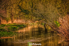 UEA (G.R Photography) Tags: uea ueariver river tree treesthroughtheseasons trees green greengrass grphotography norwich norfolk england uk ukphotography uknature landscape landscapephotography nature naturephotography uknaturephotography eastanglia