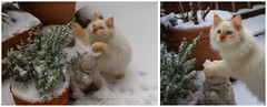 Snow (again) (FocusPocus Photography) Tags: tofu dragon katze kater cat chat gato tier animal haustier pet schnee snow winter