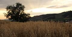 DSC05703 (ursrüegsegger) Tags: linden juli august getreideernte bauernhöfe landschaft regenbogen