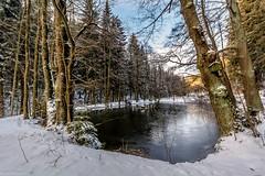 Winterwonderland (Andi Fritzsch) Tags: winterwonderland winter snow cold ice nature naturephotography landscape landscapephotography pound tree trees erzgebirge frost frosty frostymorning