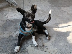 Piwui (jorluis3098) Tags: backlighting dog can happiness happy day canon camera amateur photography picture photo ambiental animal shadow shades sun sunny see life domestic